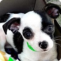 Adopt A Pet :: Tatum - San Diego, CA