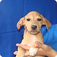 Adopt A Pet :: Nala - Oviedo, FL