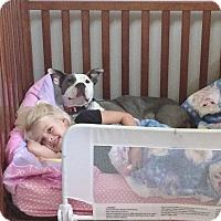 Adopt A Pet :: FLOWER - Waterbury, CT