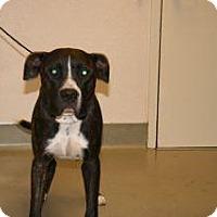 Adopt A Pet :: Honda - Wildomar, CA