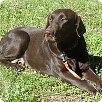 Adopt A Pet :: Murano - Denton, TX