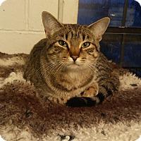 Adopt A Pet :: Indie - Glenpool, OK