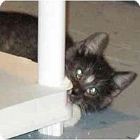 Adopt A Pet :: Pepper - Warren, OH