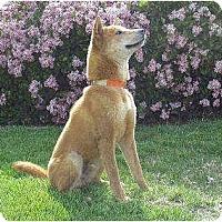 Adopt A Pet :: BeeRyong - Southern California, CA