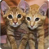 Adopt A Pet :: Kyle & Casey - New Port Richey, FL