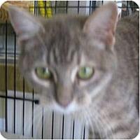 Adopt A Pet :: Babie - Dallas, TX