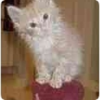 Adopt A Pet :: Keebler - Arlington, VA