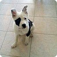 Adopt A Pet :: Winchester - Austin, TX