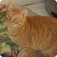 Adopt A Pet :: Dickens - Alden, IA