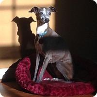 Adopt A Pet :: Fawn - Marietta, GA