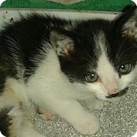 Adopt A Pet :: Jarret - Whittier, CA