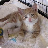 Adopt A Pet :: Harvey - bloomfield, NJ