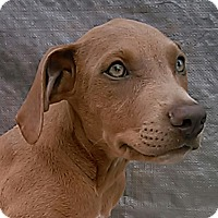 Adopt A Pet :: Sofie - Leming, TX