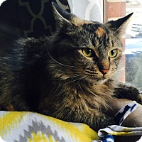 Adopt A Pet :: Lillian - Addison, IL