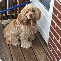 Adopt A Pet :: Maggie  -Adoption Pending - Kannapolis, NC