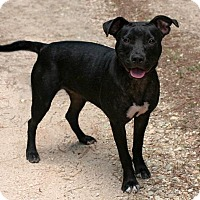Pit Bull Terrier Mix Dog for adoption in Rockingham, New Hampshire - Sadie