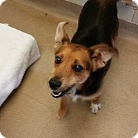 Adopt A Pet :: POOH - New Cumberland, WV
