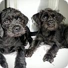 Adopt A Pet :: Bonnie & Clyde