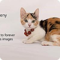Adopt A Pet :: Meeny - Arcadia, CA
