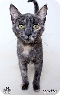 Domestic Shorthair Kitten for adoption in Luling, Louisiana - Sparkles