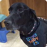Adopt A Pet :: Toby - Loganville, GA