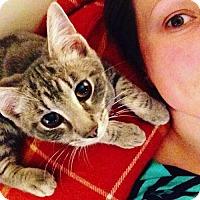 Adopt A Pet :: Felis - Marlborough, MA