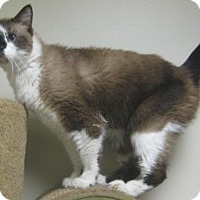 Cats For Adoption In Northwest Indiana