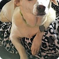 Adopt A Pet :: Jenna - St Louis, MO