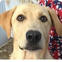 Adopt A Pet :: Tanner - Springdale, AR