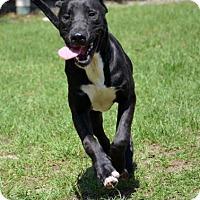 Adopt A Pet :: Gilligan - Ridgeland, SC