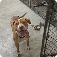 Adopt A Pet :: NENE - Sterling, MA