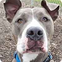 Adopt A Pet :: Bess - Lapeer, MI