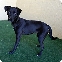 Adopt A Pet :: Nessie Mae - Casa Grande, AZ