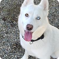 Adopt A Pet :: Kasumi - Lompoc, CA