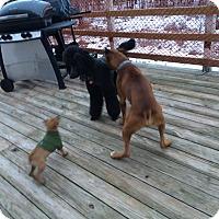 Adopt A Pet :: Junior - Bennington, VT