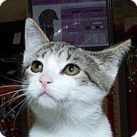 Adopt A Pet :: Vienna N - Sacramento, CA