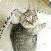 Adopt A Pet :: Hickory - Medina, OH