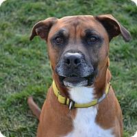 Adopt A Pet :: Geo - Lake Odessa, MI