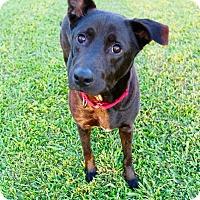 Adopt A Pet :: Hunter - Chicago, IL