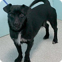 Adopt A Pet :: Crosby in CT - Manchester, CT