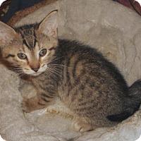 Adopt A Pet :: Carob - Dallas, TX