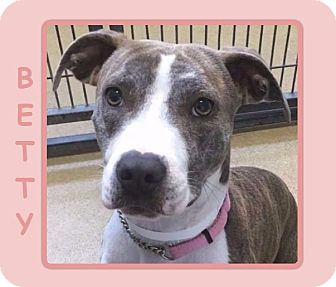Staffordshire Bull Terrier/Terrier (Unknown Type, Medium) Mix Dog for adoption in Dallas, North Carolina - BETTY