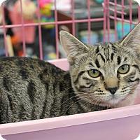 Adopt A Pet :: Freddy & Fiona - Studio City, CA