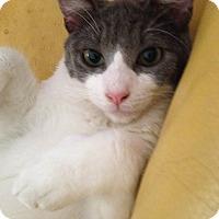 Adopt A Pet :: ROWDY - Brea, CA