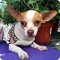 Adopt A Pet :: Burton - Detroit, MI