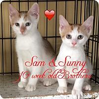 Adopt A Pet :: Sam - Island Park, NY
