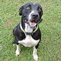 Adopt A Pet :: Wendy - Cottonport, LA