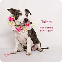 Basset Hound Mix Dog for adoption in Lake Forest, California - Takota