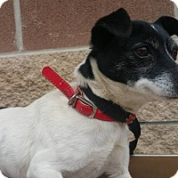 Adopt A Pet :: Beazly - Marion, IN
