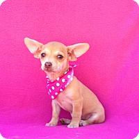 Adopt A Pet :: Janis - Burbank, CA